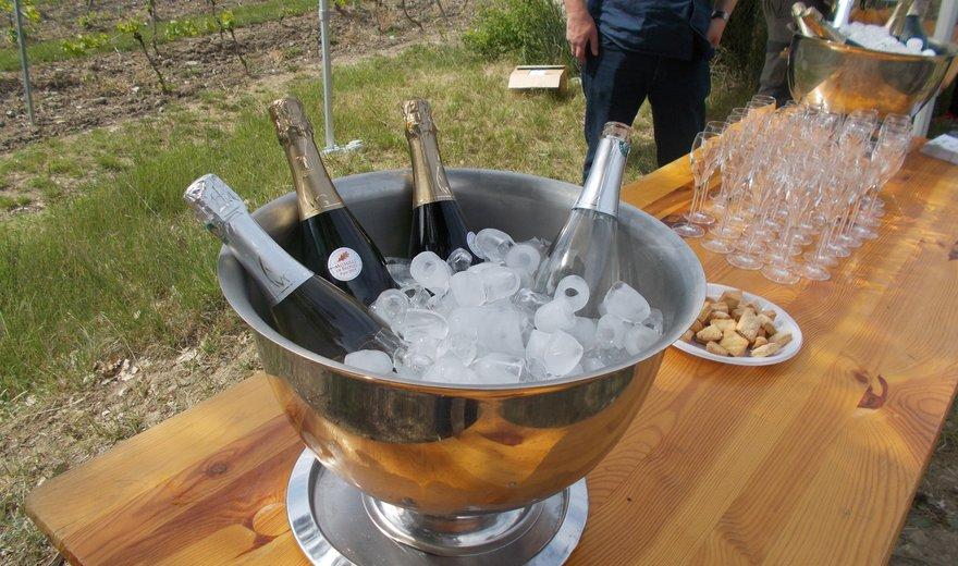 Balade / dégustation dans le vignoble de Vercheny